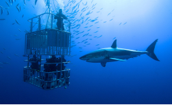 Great White Shark Expedition, 5 Tage