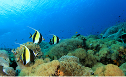 Great Barrier Reef Tauchkurs & Tauchexkursion, 5 Tage