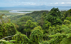 Daintree & Cape Tribulation